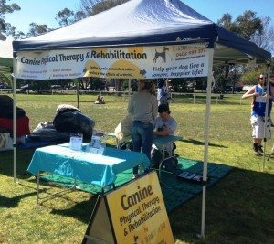 Dogs Day Out Frenchs Forest – 25 August 2013