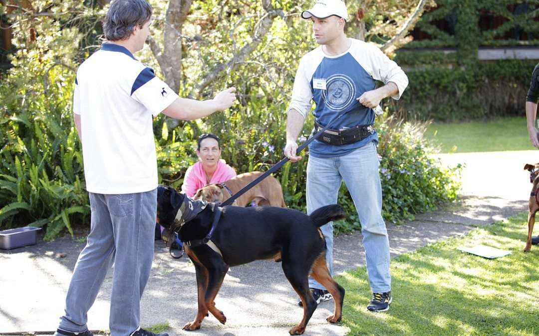 Canine Wellbeing Workshop – Sunday 23 November 2014