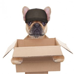 dog-with-parcel