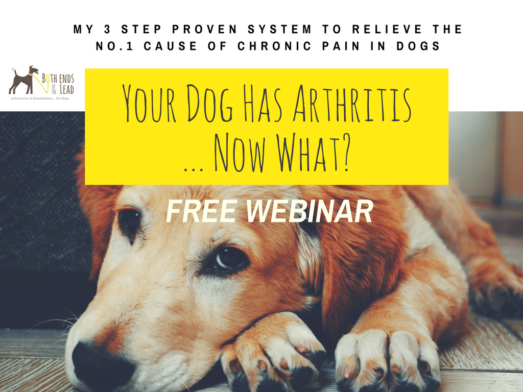 Treating Chronic Pain In Dogs
